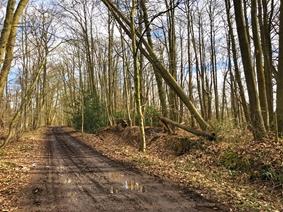 Mole Road, Arborfield, READING
