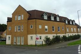 Hazel Covert, Thetford, Norfolk