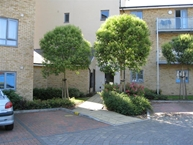 Wicks Place, Chelmsford Photo 9